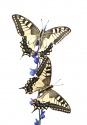 entre mariposas