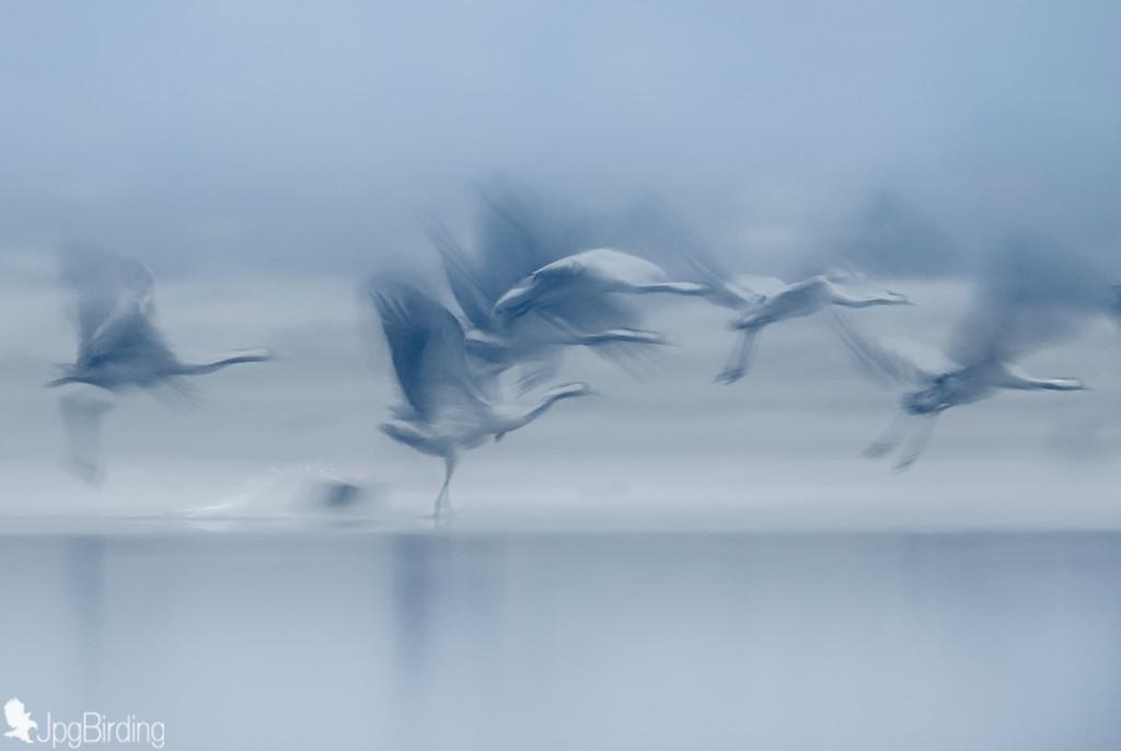 Misty Cranes II
