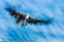Flying in Blue