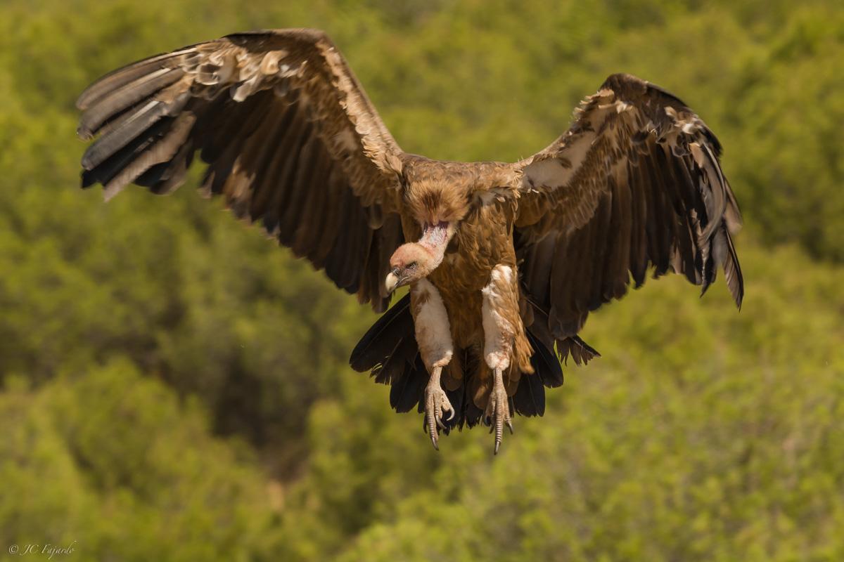 Con las alas abiertas